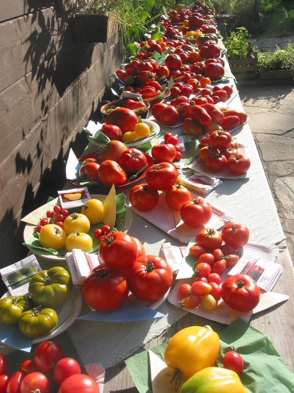 Tomaten19 Tomatenausstellung im GdV