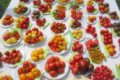 Tomaten21Tomatensortenausstellung